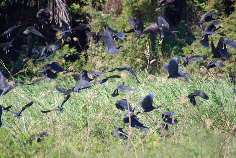 oiseaux_ankarafantsika